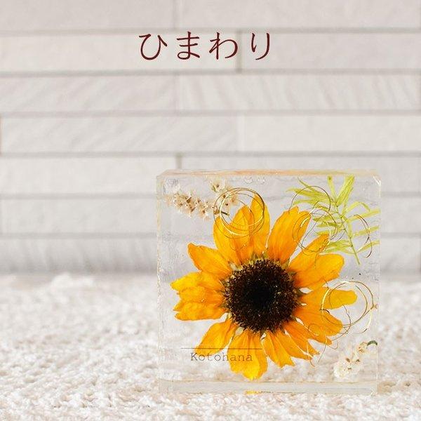 kotohana_cristal_9