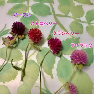 kotohana_herbarium-kit_2