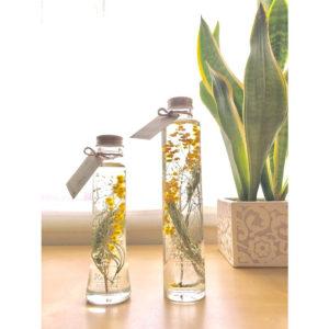 kotohana_herbarium-mimoza1_1