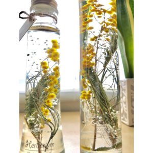 kotohana_herbarium-mimoza1_2