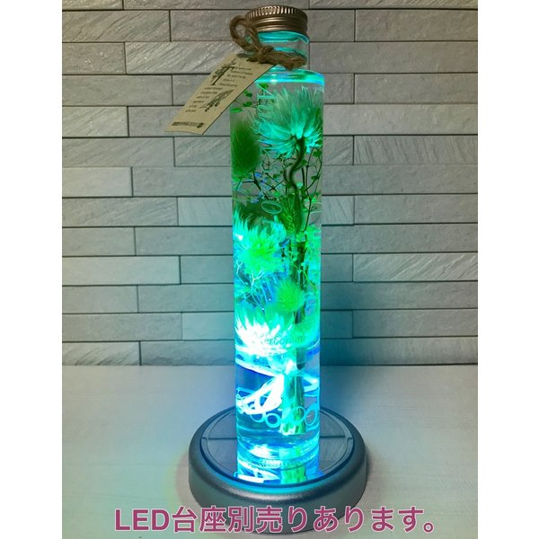 kotohana_herbarium-mimoza1_8