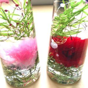 kotohana_herbarium-mother3_1
