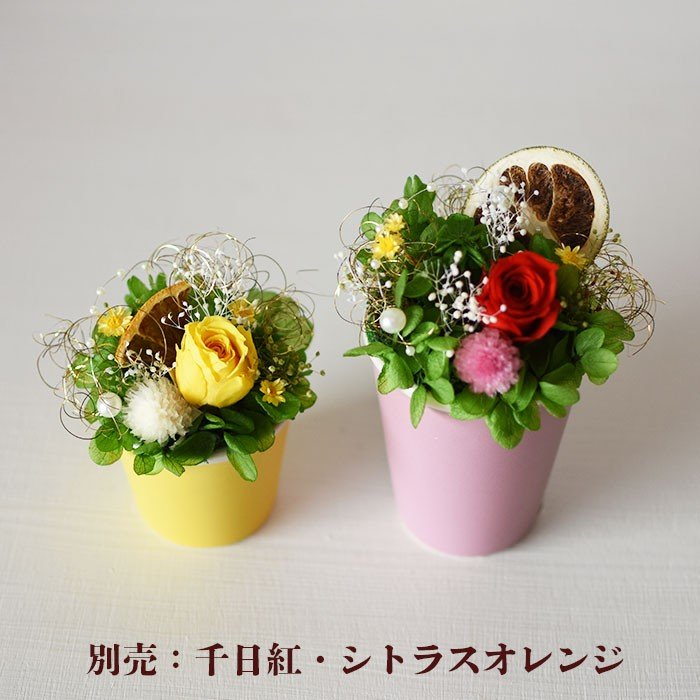 kotohana_kazai-bara_12