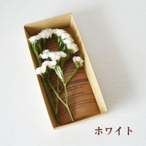 kotohana_statice_1